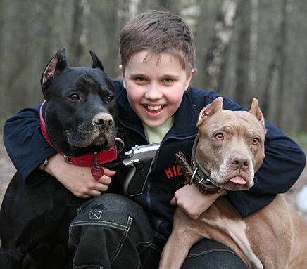 Hybrid pitbull dogs
