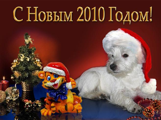 Немецкая овчарка фотографии собак породы Немецкая овчарка